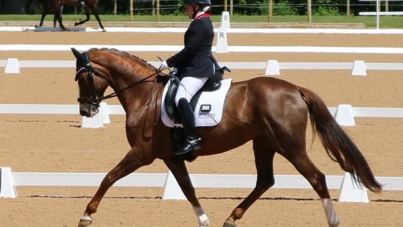 a female Para equestrian rider on a horse